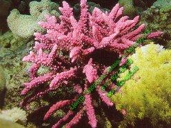 Коралловые рифы Австралии