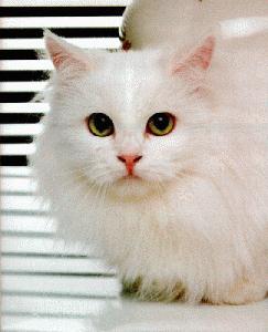 Домашние животные. Кошка