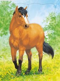 Домашние животные. Лошадь