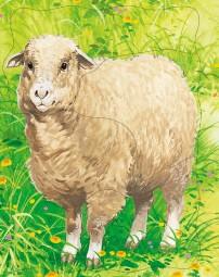 Домашние животные. Овца