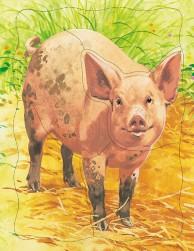 Домашние животные.Свинья