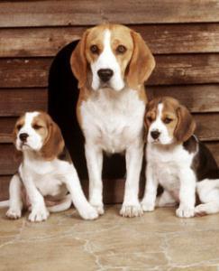 Домашние животные.Собака