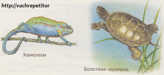 Хамелеон и черепаха