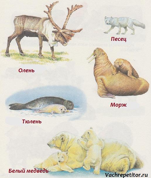Дикие животные Севера