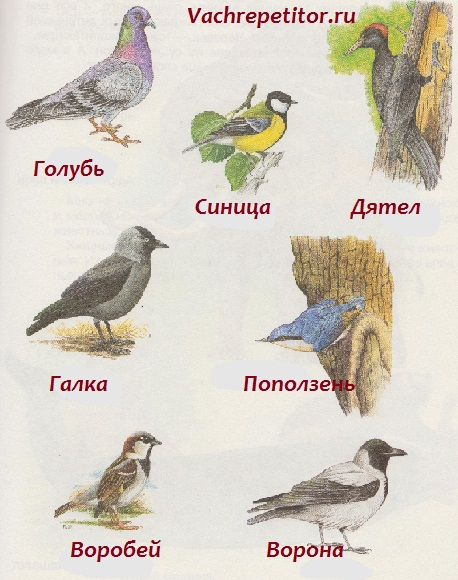 Зимующие птицы не улетают в теплые страны и зимуют в наших краях.