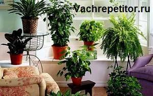 Растения. Комнатные цветы