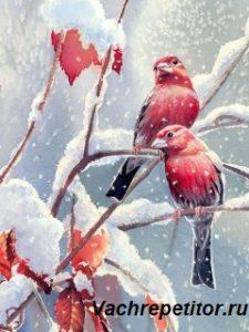 Загадки о птицах