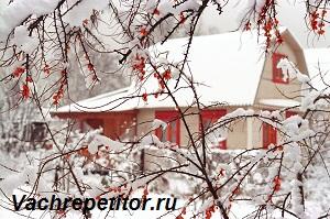 Январь - середина зимы